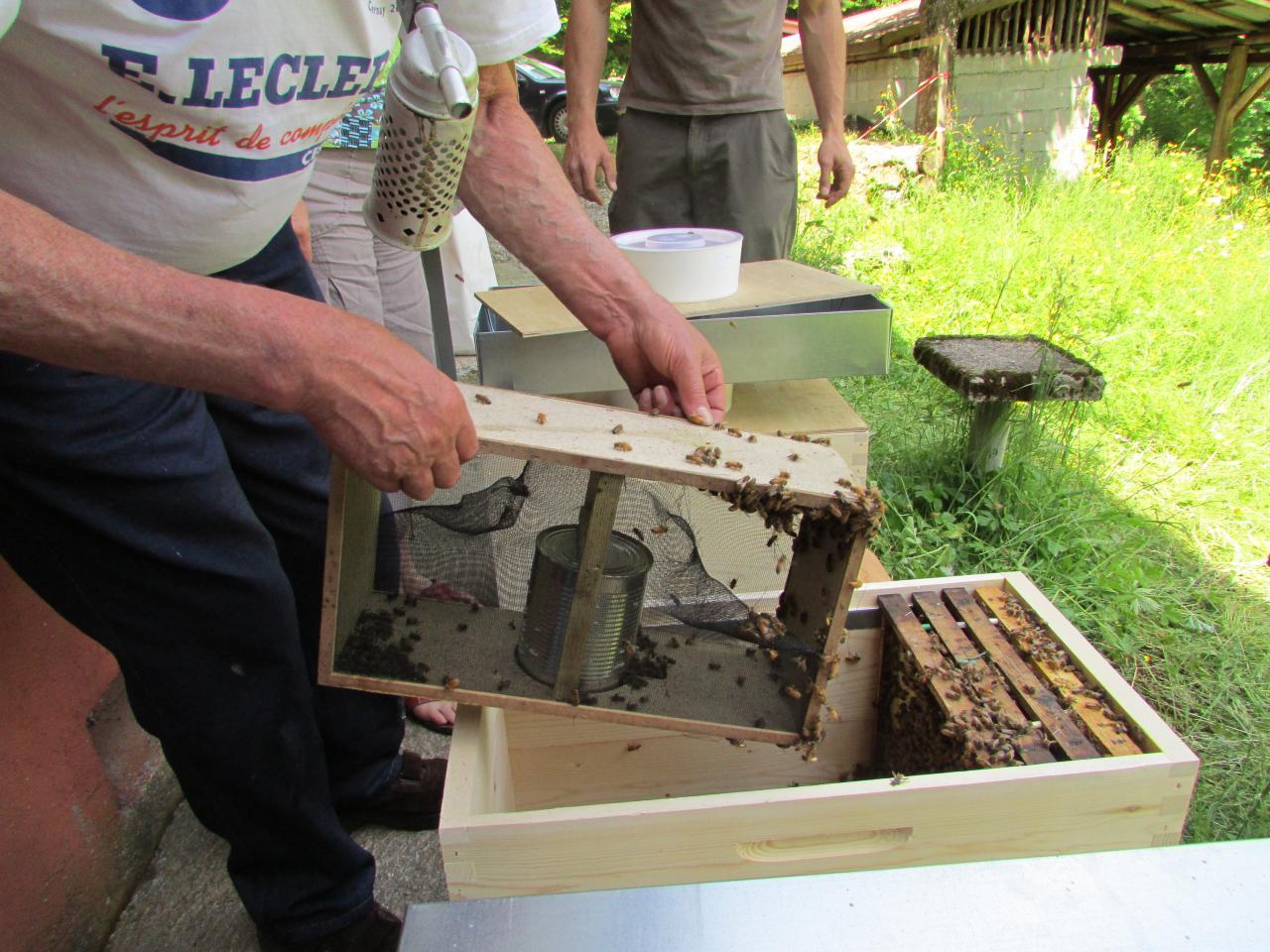Paquet d'abeille transvasé dans sa ruche