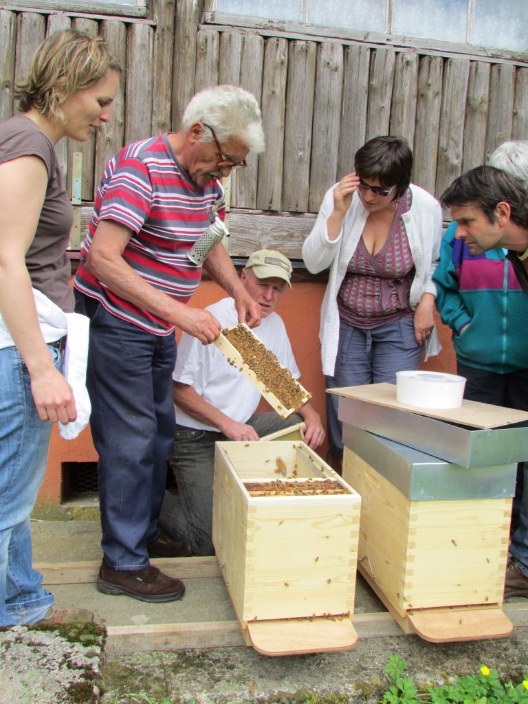 Les abeilles ont déjà abopté leurs nouveaux cadres