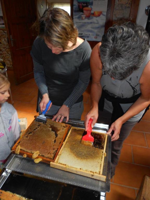 Extraction du miel des ruches du rucher école