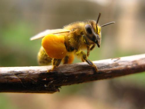 Valise de pollen