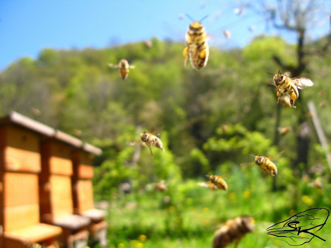 Retour a la ruche